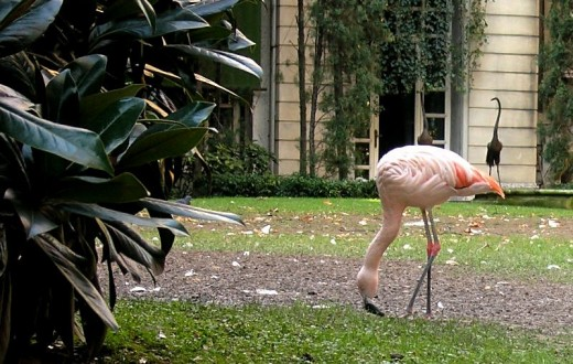 flamingo_