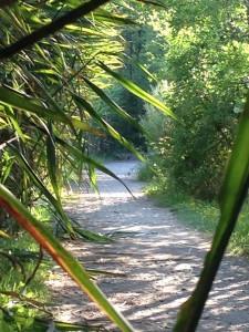 Uno dei sentieri che attraversano l'area umida